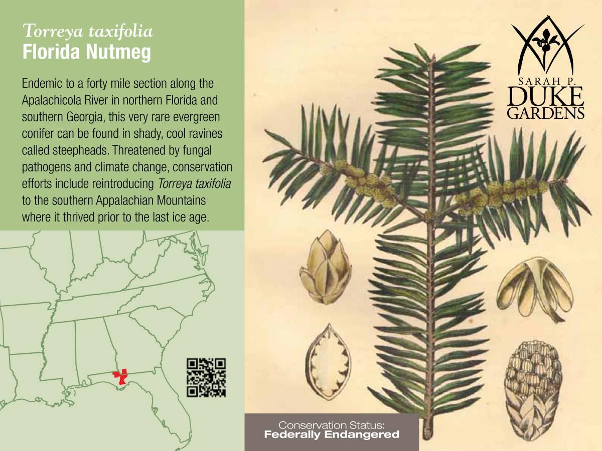 The wildlife garden in the h l blomquist garden of native plants - Informational Pdfs Trillium Trillium Cuneatum