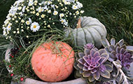 planter with pumpkins and succulents