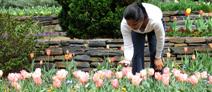 Visit Duke Gardens