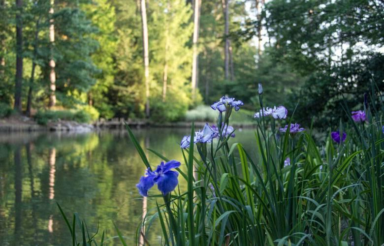 Asiatic Arboretum Duke Gardens