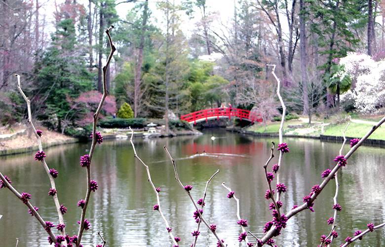 Asiatic Arboretum