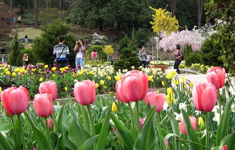 terrace gardens - Garden