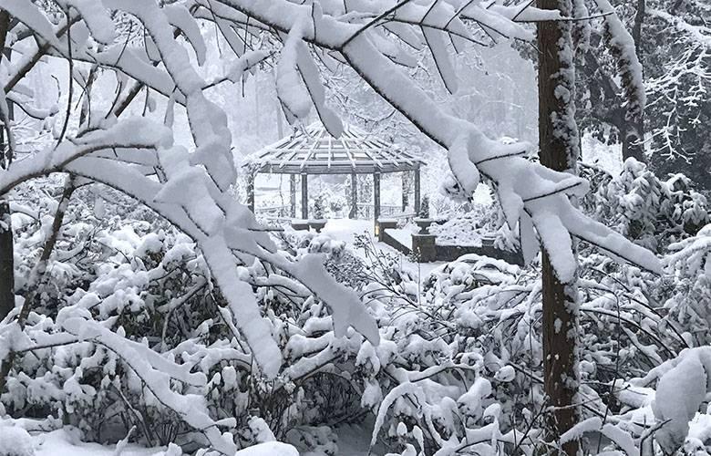 The Pergola in the Terrace Gardens. Photo by Jan Watson.