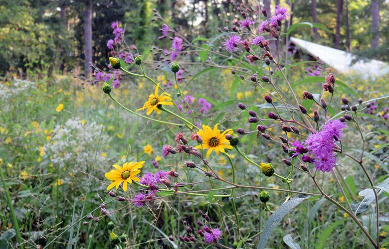 The Piedmont Prairie and Classsroom in fall.