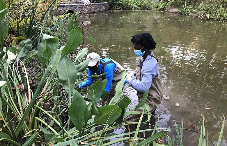 two students collect specimens in a stream