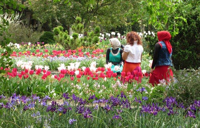 Duke Gardens   Duke University